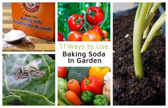 11 Ways to Use Baking Soda in Garden