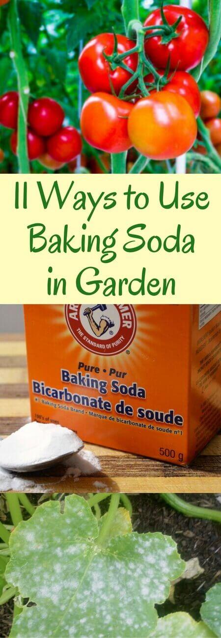 11 Ways to Use Baking Soda in Garden