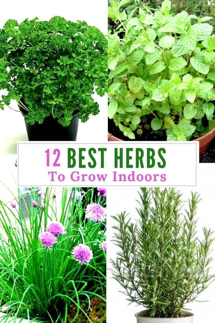 12 Best Herbs to Grow Indoors