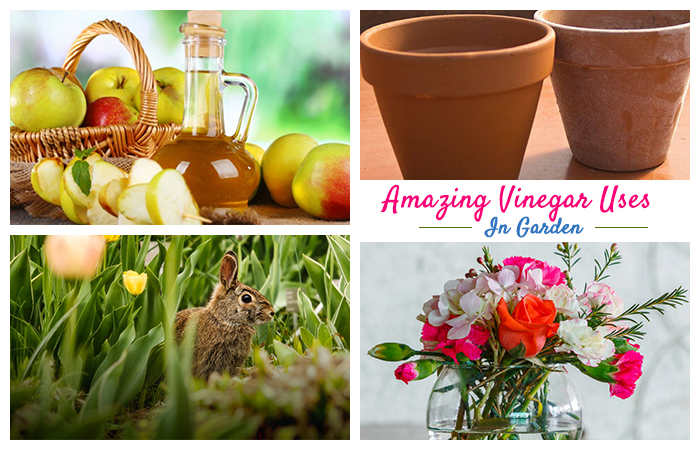 Amazing Vinegar Uses In Garden