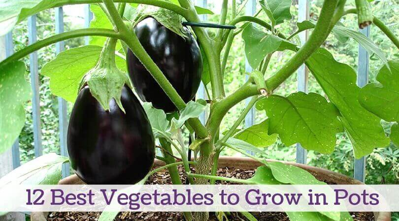 What Are The Best Vegetables To Grow In Pots