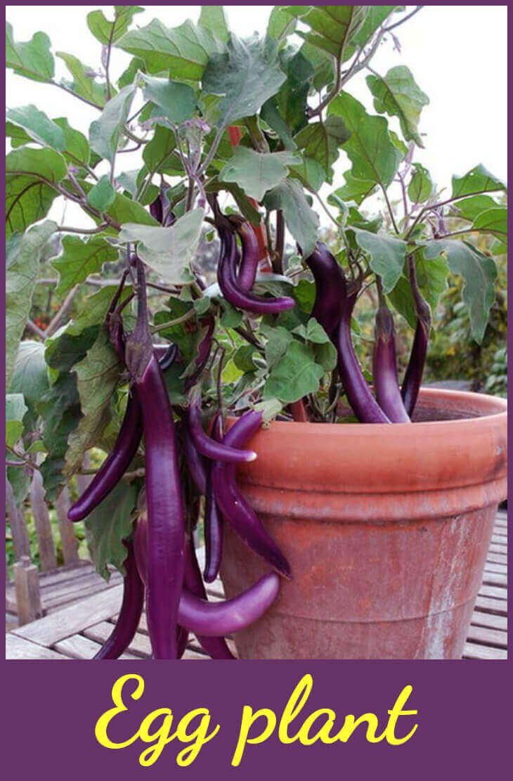 What are the Best Vegetables to Grow in Pots?