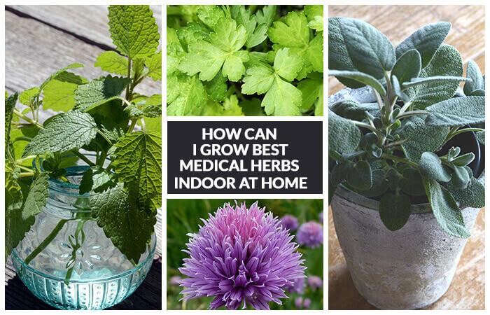 12 Best Medicinal Herbs Indoors