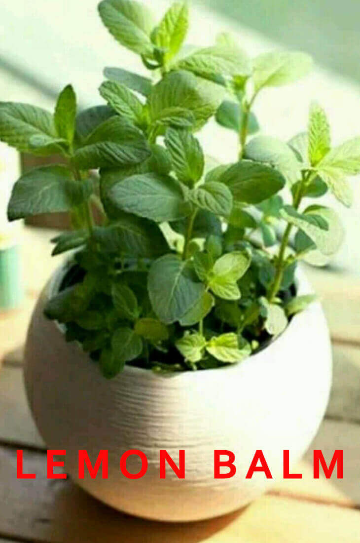 How can I Grow Best Herbs Indoors at home