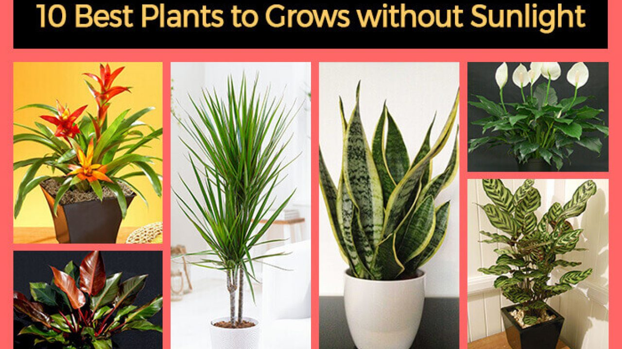 10 Best Plants That Grows In Shade, Outdoor Plants That Does Not Need Sunlight