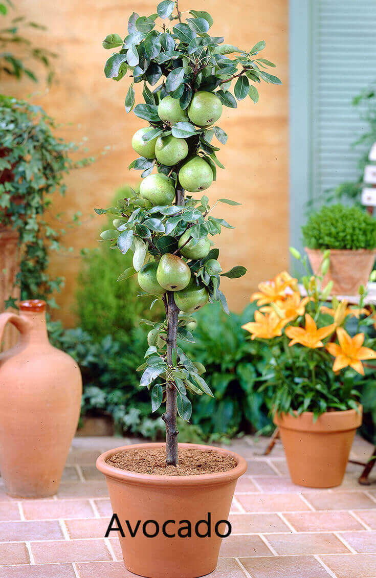 10 Best Fruits to Grow in Your Pots