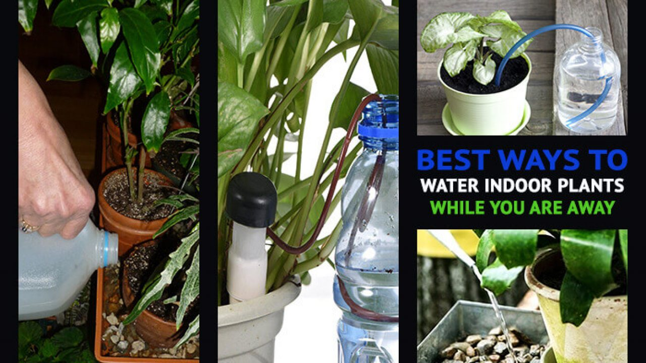 Best ways to Water Indoor Plants while you are Away   Home Gardeners