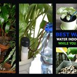 Best ways to Water Indoor Plants while you are Away