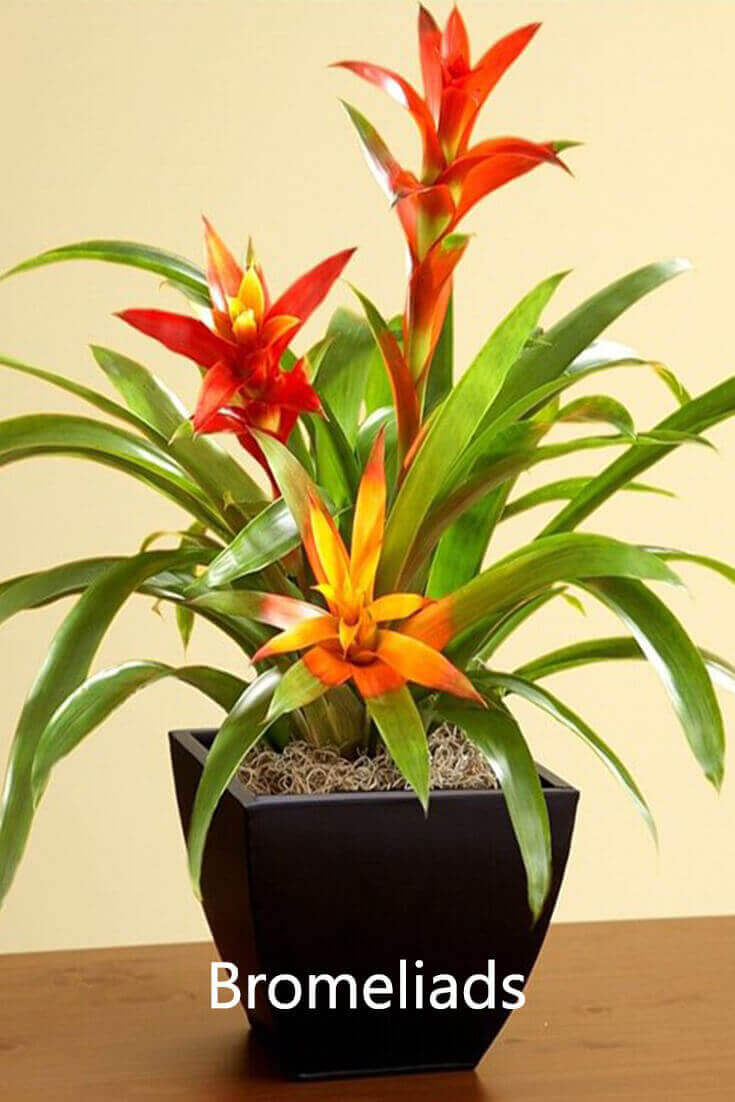 10 Best Plants that Grows in Shade without Sunlight at Home