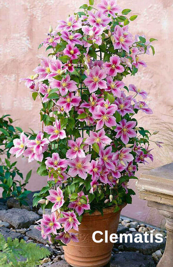 Best Pergola Plants to Grow in your Pots