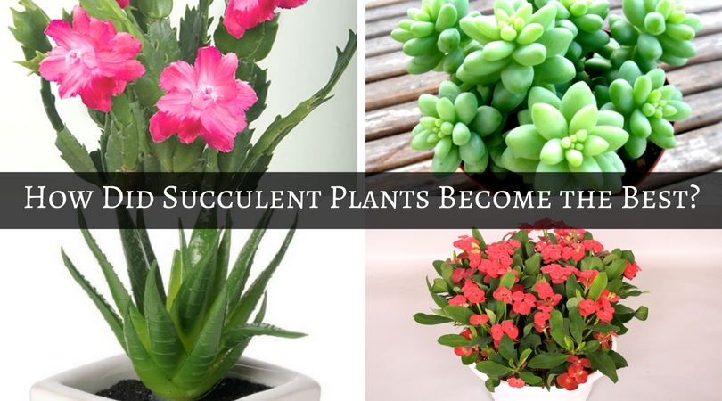 How Did Succulent Plants Become The Best Find Out Home