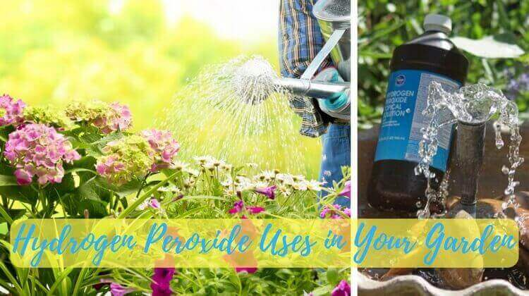 Hydrogen Peroxide Uses in Your Garden