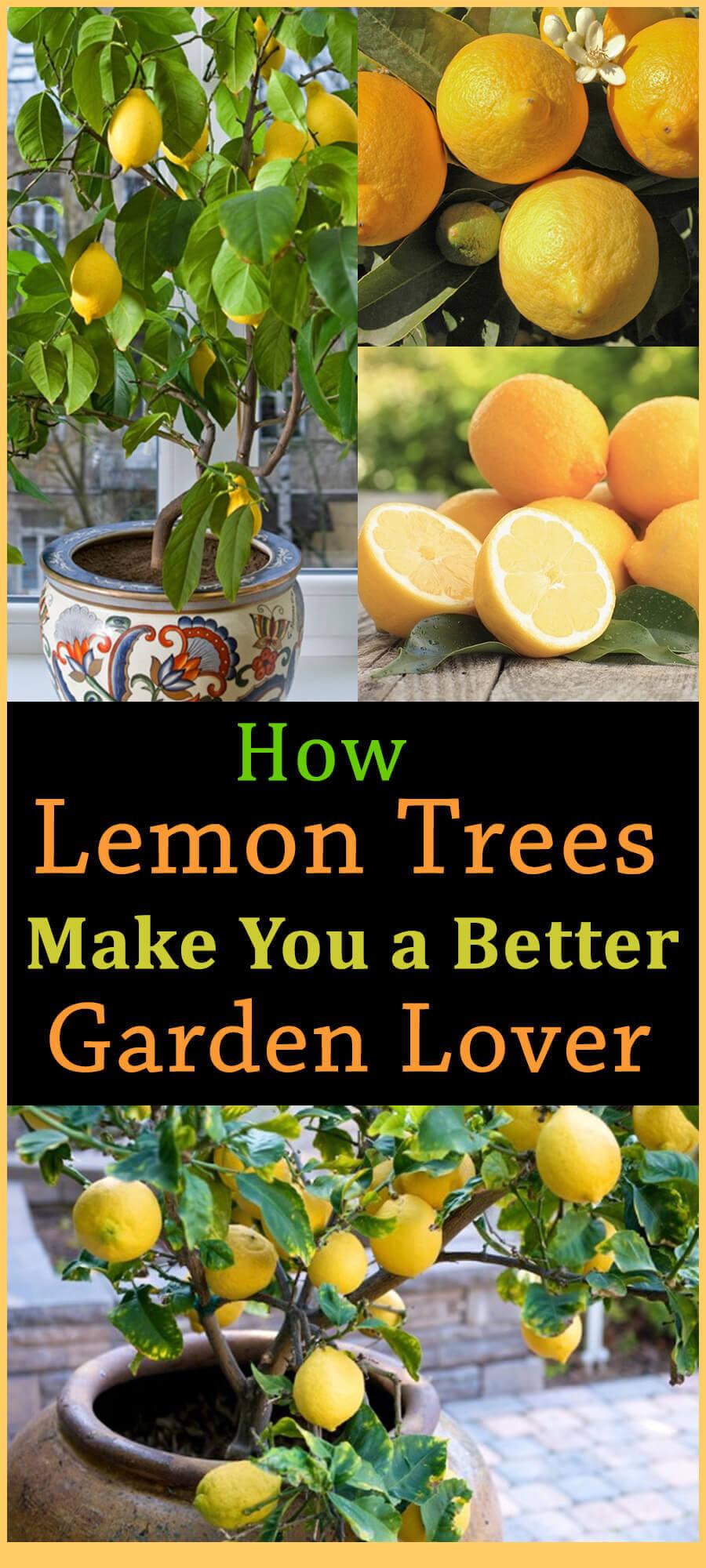 How Lemon Trees Make You a Better Garden Lover