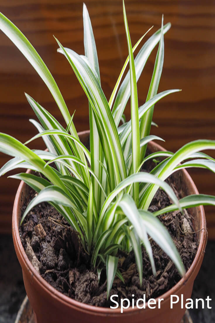10 Best Plants That Grows In Shade Without Sunlight At