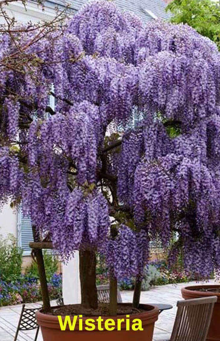 Best Pergola Plants to Grow in your Pots