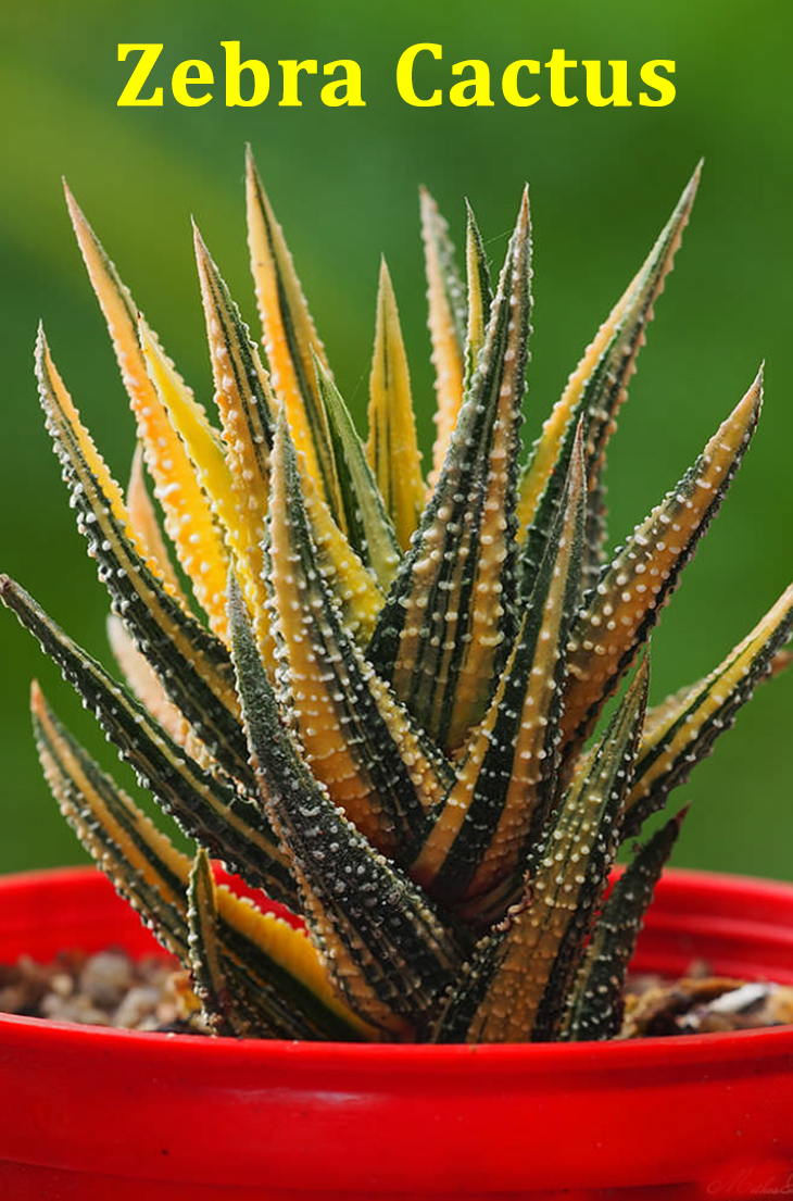 How Did Succulent Plants Become the Best? Find Out.