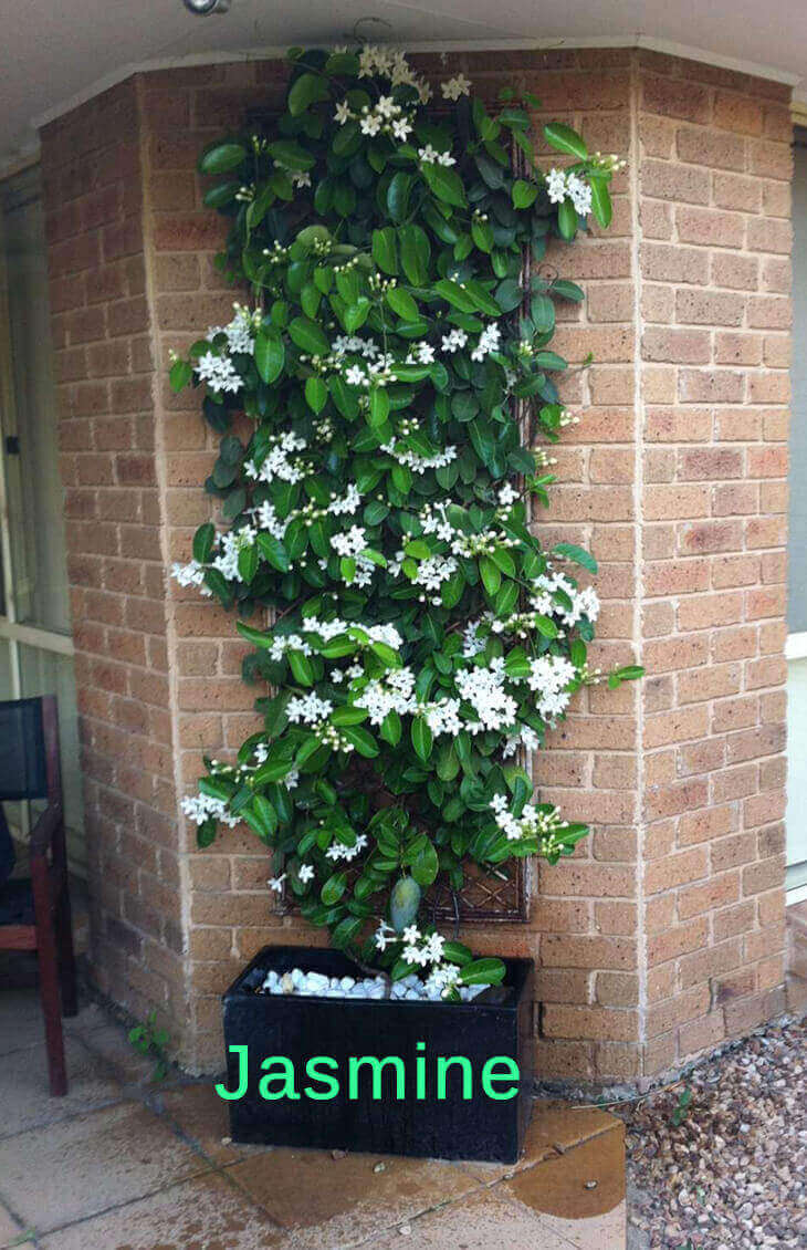 top 10 pergola plants to grow your pots home gardeners. Black Bedroom Furniture Sets. Home Design Ideas