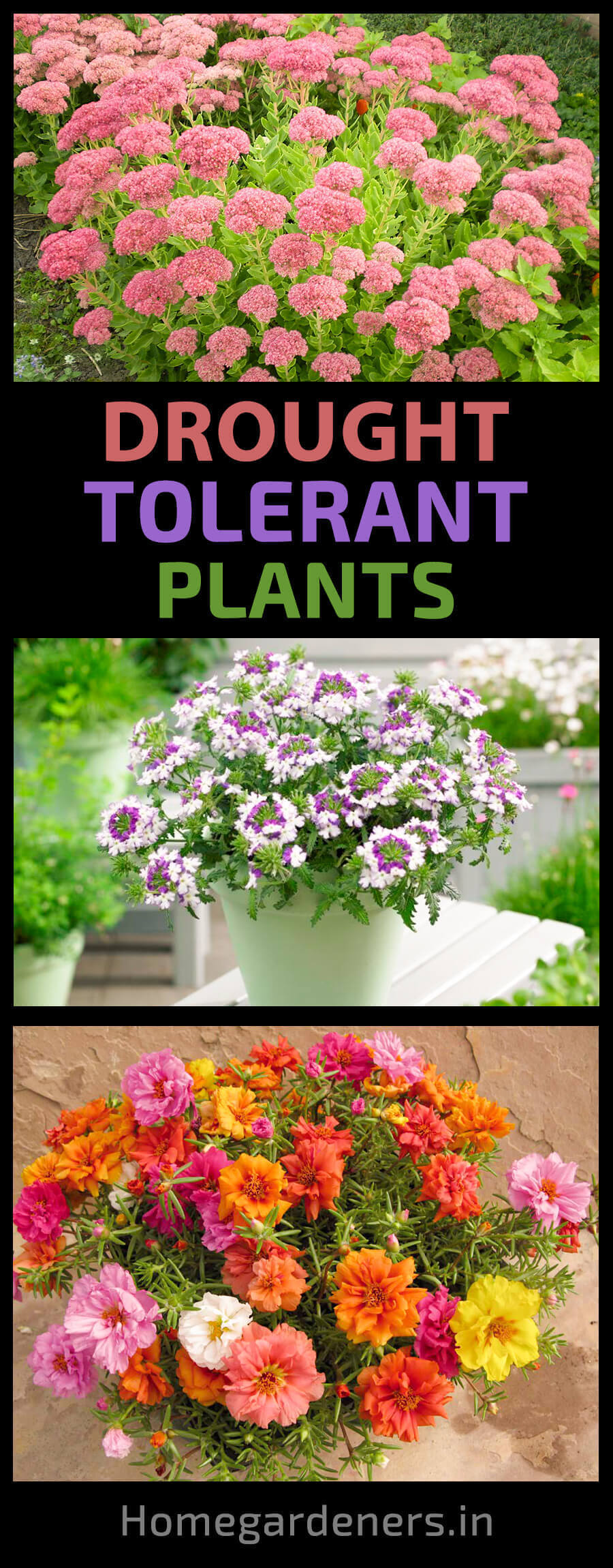 The 10 Best Drought Tolerant Plants that Grow in Lack of Water