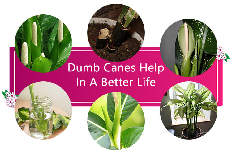 How Dumb Canes Can Help You Live a Better Life