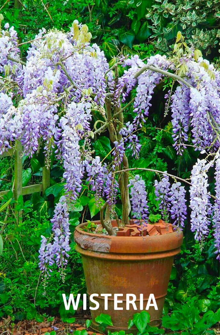 20 Best Beautiful Fragrant Flowers in the world