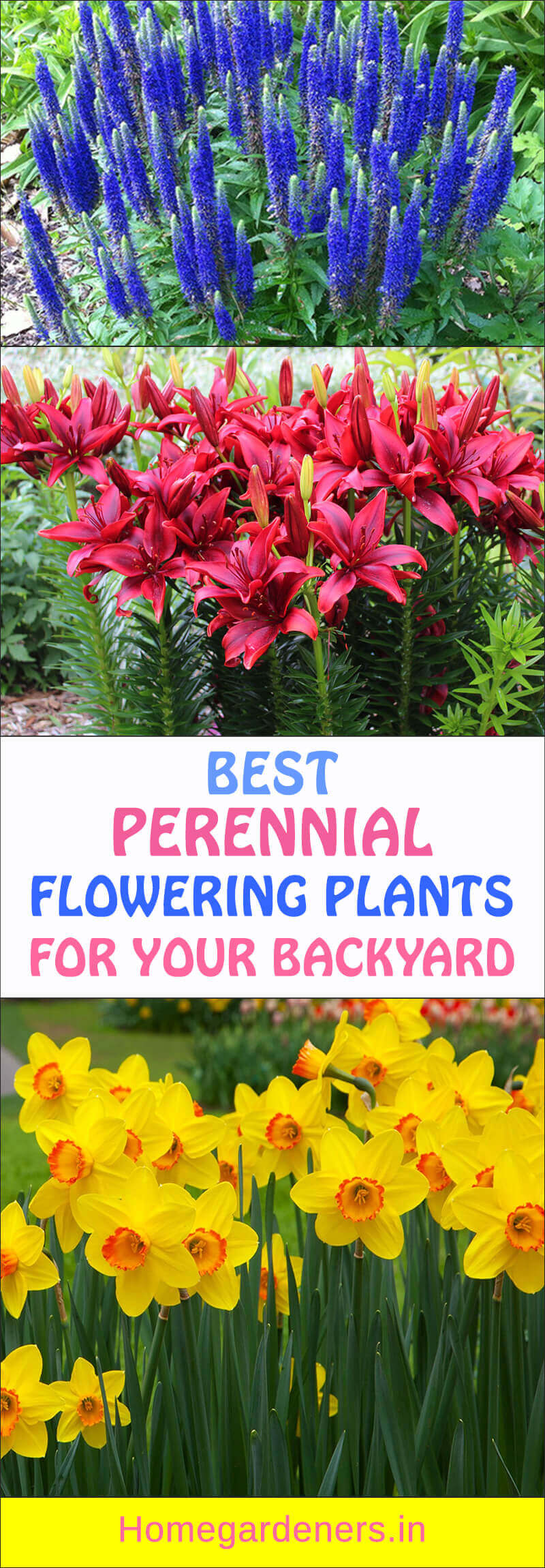 10 Best Perennial flowering plants for your Backyard