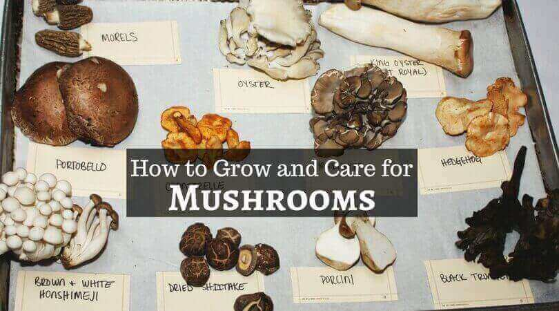 Mushrooms – How to Grow and Care for Mushrooms Easily