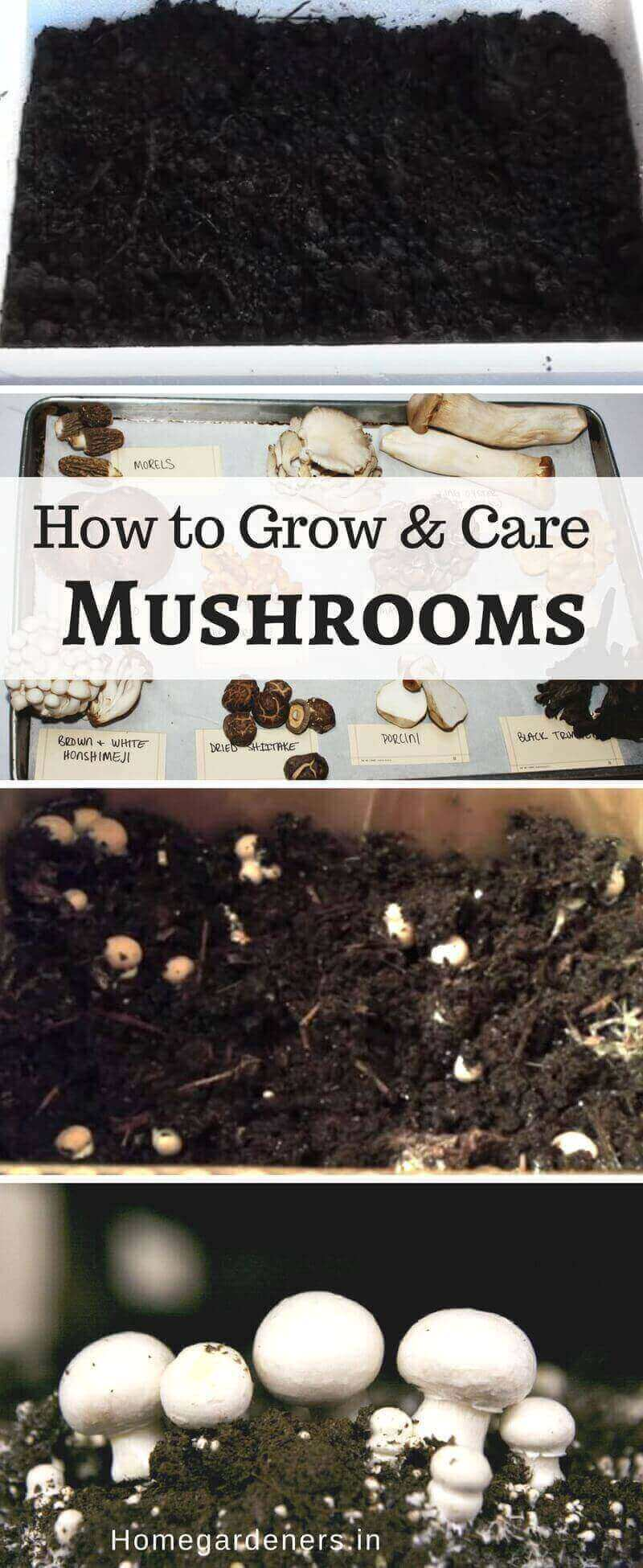 How to Grow and Care for Mushrooms easily